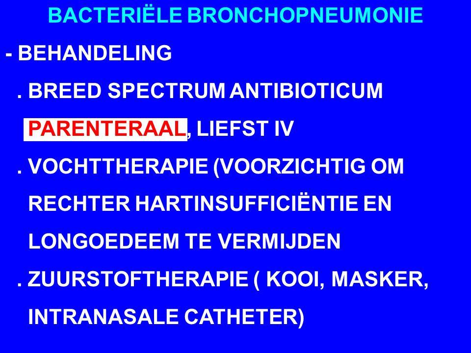 BACTERIËLE BRONCHOPNEUMONIE - BEHANDELING. BREED SPECTRUM ANTIBIOTICUM PARENTERAAL, LIEFST IV. VOCHTTHERAPIE (VOORZICHTIG OM RECHTER HARTINSUFFICIËNTI