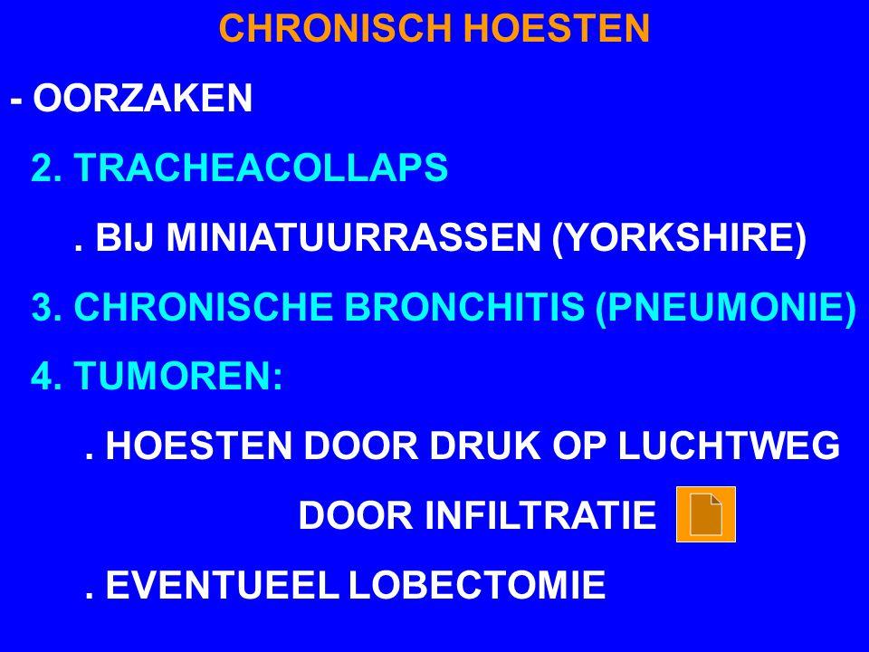 CHRONISCH HOESTEN - OORZAKEN 2. TRACHEACOLLAPS. BIJ MINIATUURRASSEN (YORKSHIRE) 3. CHRONISCHE BRONCHITIS (PNEUMONIE) 4. TUMOREN:. HOESTEN DOOR DRUK OP