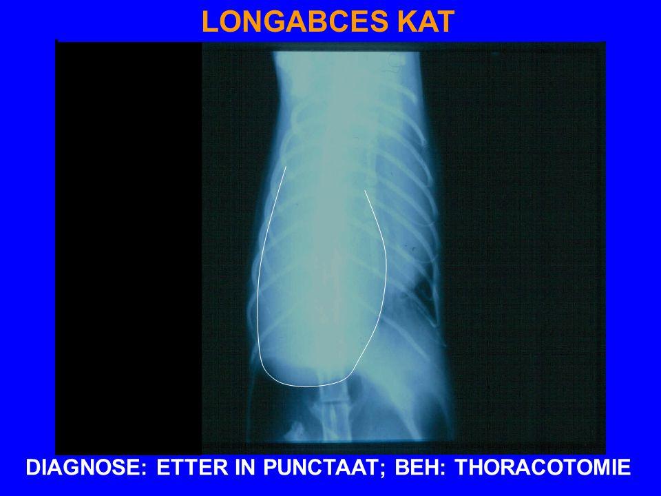 LONGABCES KAT DIAGNOSE: ETTER IN PUNCTAAT; BEH: THORACOTOMIE