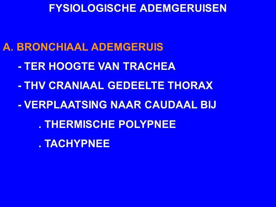 FYSIOLOGISCHE ADEMGERUISEN A. BRONCHIAAL ADEMGERUIS - TER HOOGTE VAN TRACHEA - THV CRANIAAL GEDEELTE THORAX - VERPLAATSING NAAR CAUDAAL BIJ. THERMISCH