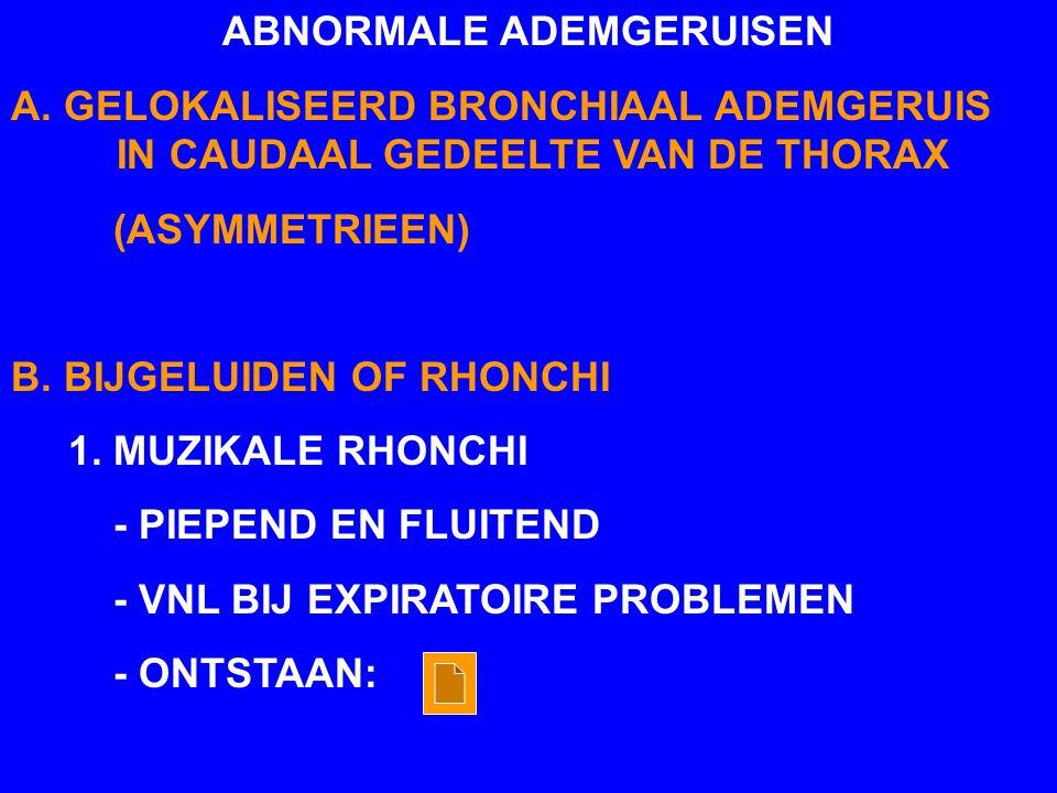 ABNORMALE ADEMGERUISEN A. GELOKALISEERD BRONCHIAAL ADEMGERUIS IN CAUDAAL GEDEELTE VAN DE THORAX (ASYMMETRIEEN) B. BIJGELUIDEN OF RHONCHI 1. MUZIKALE R