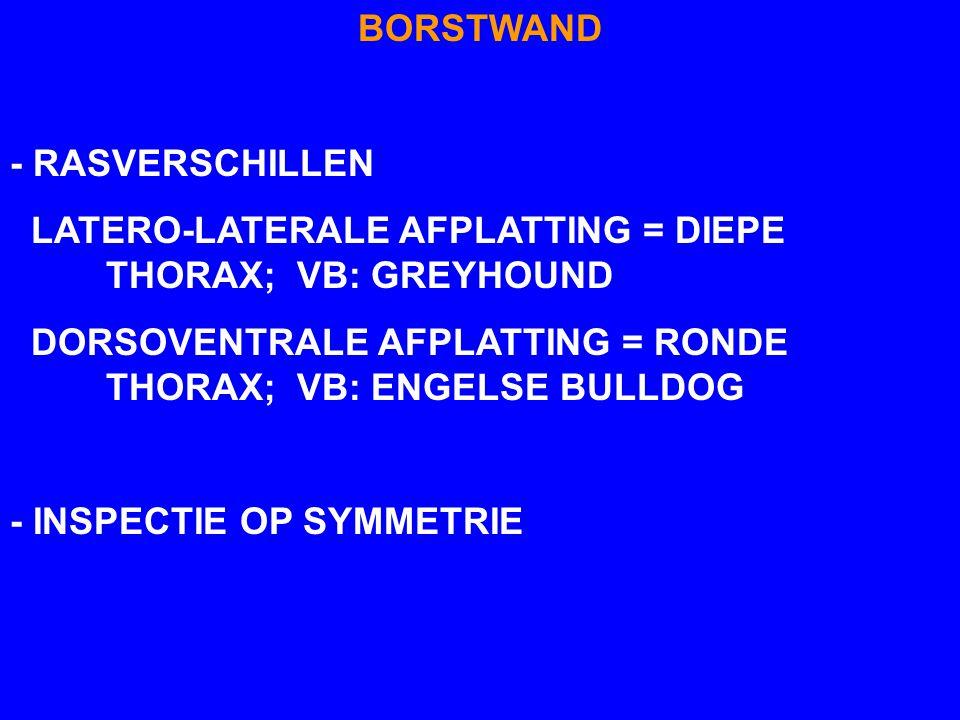BORSTWAND - RASVERSCHILLEN LATERO-LATERALE AFPLATTING = DIEPE THORAX; VB: GREYHOUND DORSOVENTRALE AFPLATTING = RONDE THORAX; VB: ENGELSE BULLDOG - INS