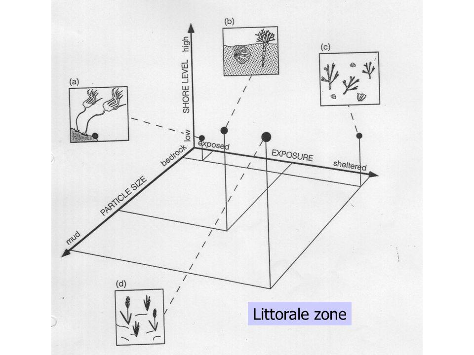 Littorale zone