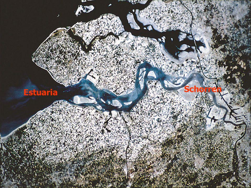 Estuaria Schorren