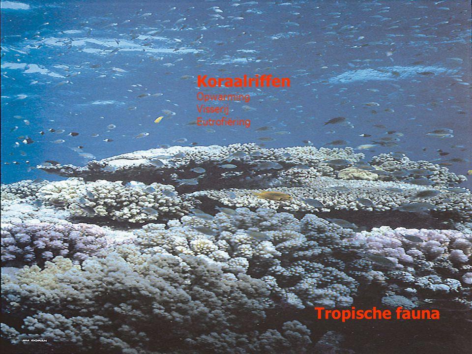 Koraalriffen Opwarming Visserij Eutrofiëring Tropische fauna
