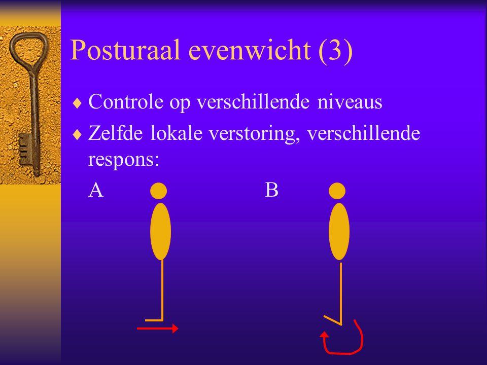 Posturaal evenwicht (3)  Controle op verschillende niveaus  Zelfde lokale verstoring, verschillende respons: AB