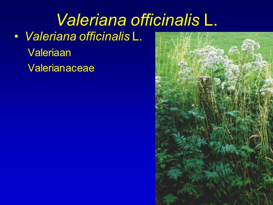Valeriana officinalis L. Valeriaan Valerianaceae