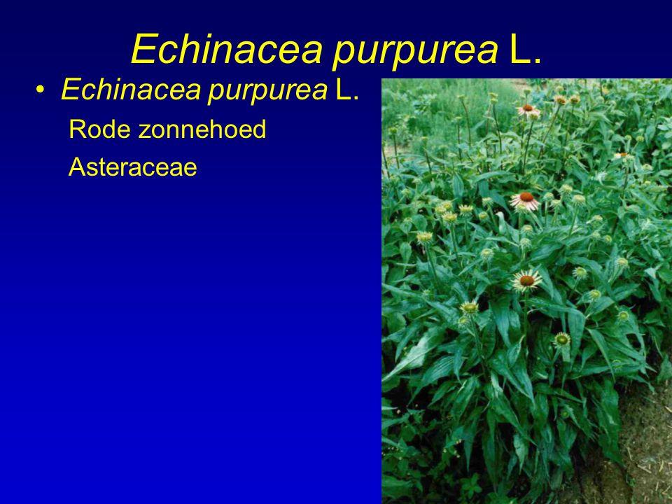 Echinacea purpurea L. Rode zonnehoed Asteraceae