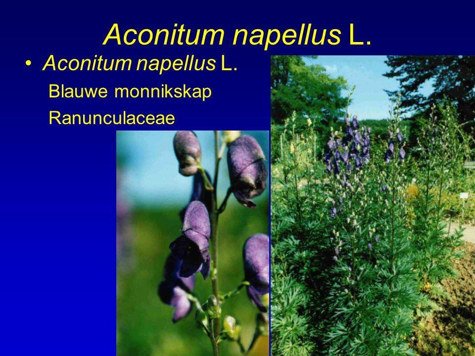 Aconitum napellus L. Blauwe monnikskap Ranunculaceae
