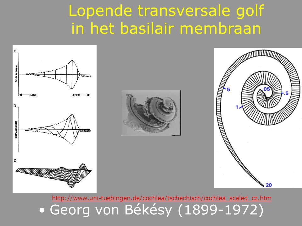 Lopende transversale golven Komen tot stand door een enkelvoudige trilling De beweging wordt doorgegeven