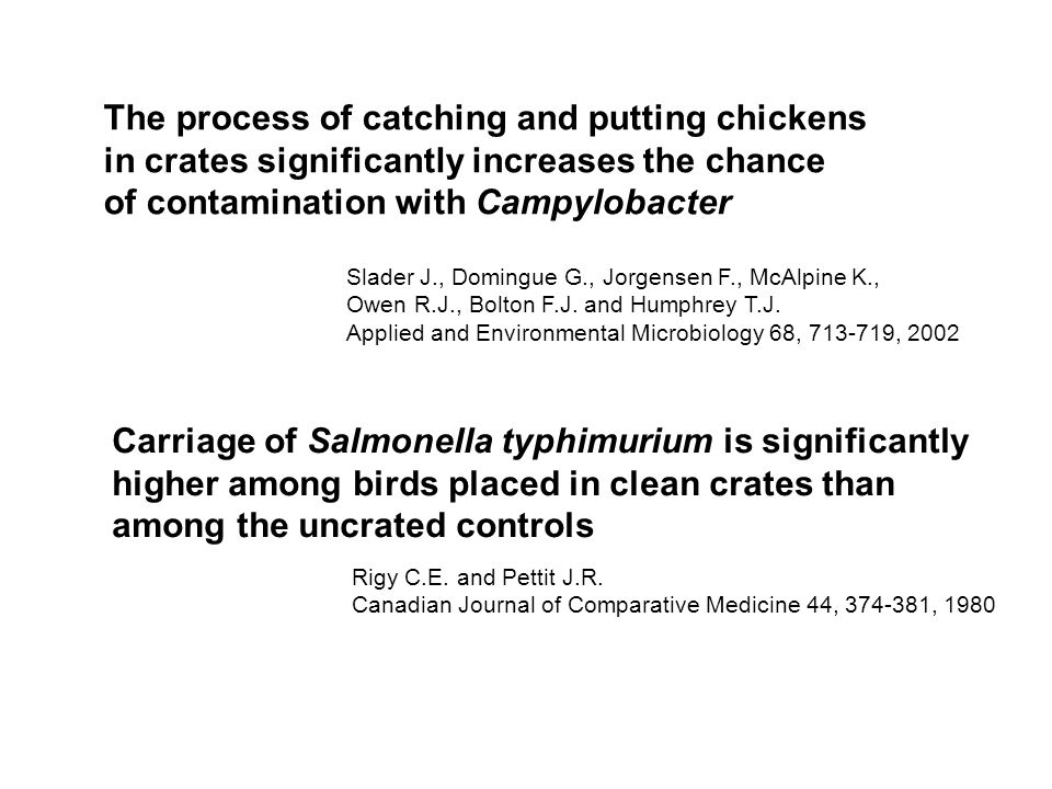 The process of catching and putting chickens in crates significantly increases the chance of contamination with Campylobacter Slader J., Domingue G.,