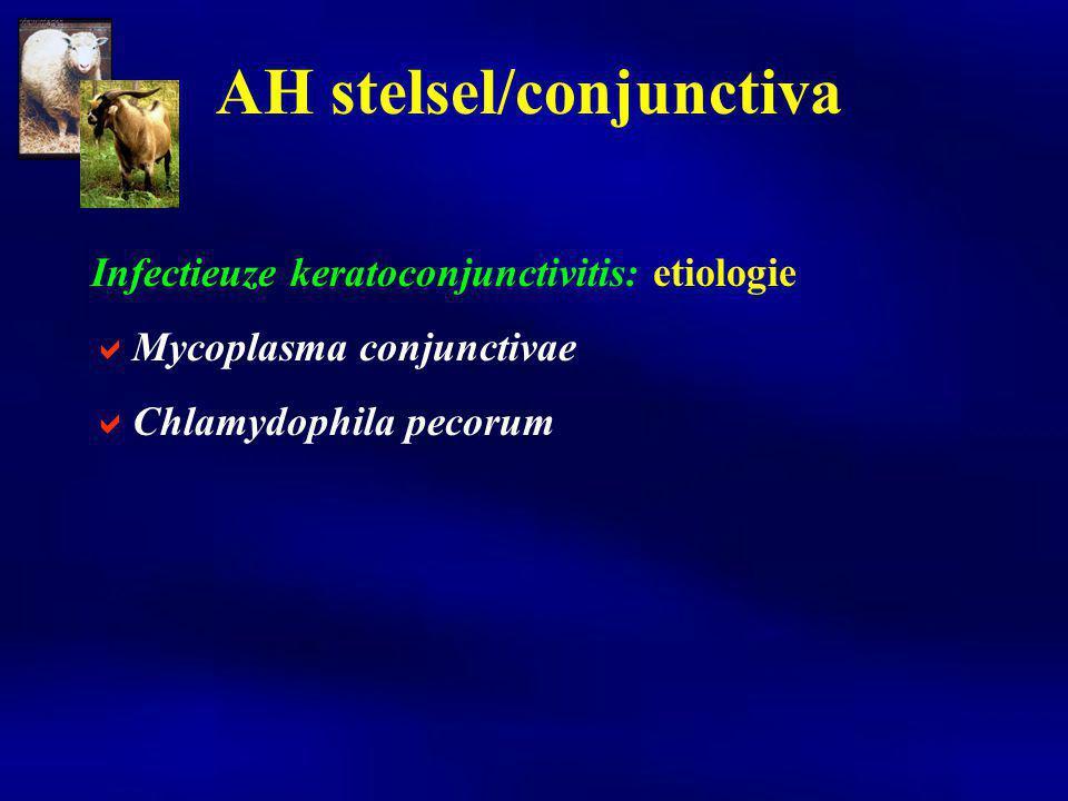 Infectieuze keratoconjunctivitis: etiologie  Mycoplasma conjunctivae  Chlamydophila pecorum AH stelsel/conjunctiva