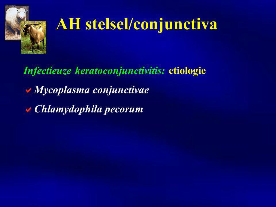 Clostridium perfringens enterotoxemieën: etiologie  exotoxines van C.