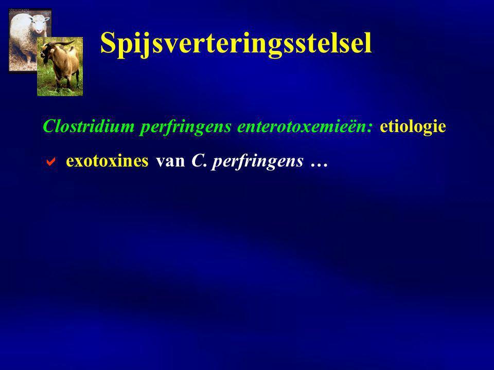 Clostridium perfringens enterotoxemieën: etiologie  exotoxines van C. perfringens … Spijsverteringsstelsel