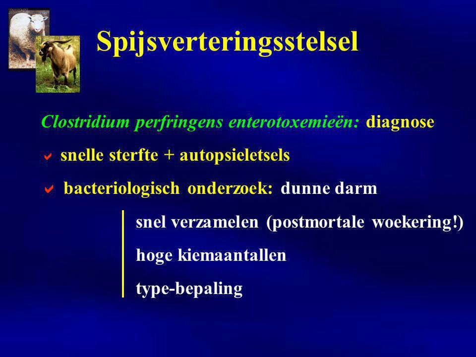Clostridium perfringens enterotoxemieën: diagnose  snelle sterfte + autopsieletsels  bacteriologisch onderzoek: dunne darm snel verzamelen (postmort