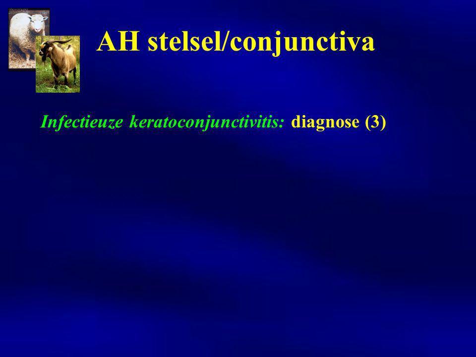 Infectieuze keratoconjunctivitis: diagnose (4)  uitstrijkje  transportmedium voor isolatie  transportmedium voor ELISA  transportmedium voor PCR AH stelsel/conjunctiva
