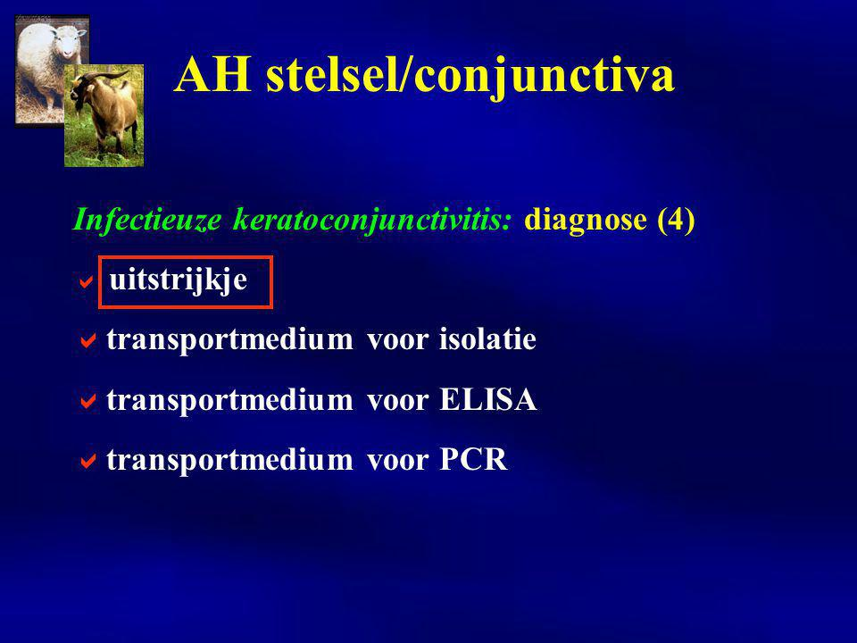 Infectieuze keratoconjunctivitis: diagnose (4)  uitstrijkje  transportmedium voor isolatie  transportmedium voor ELISA  transportmedium voor PCR A