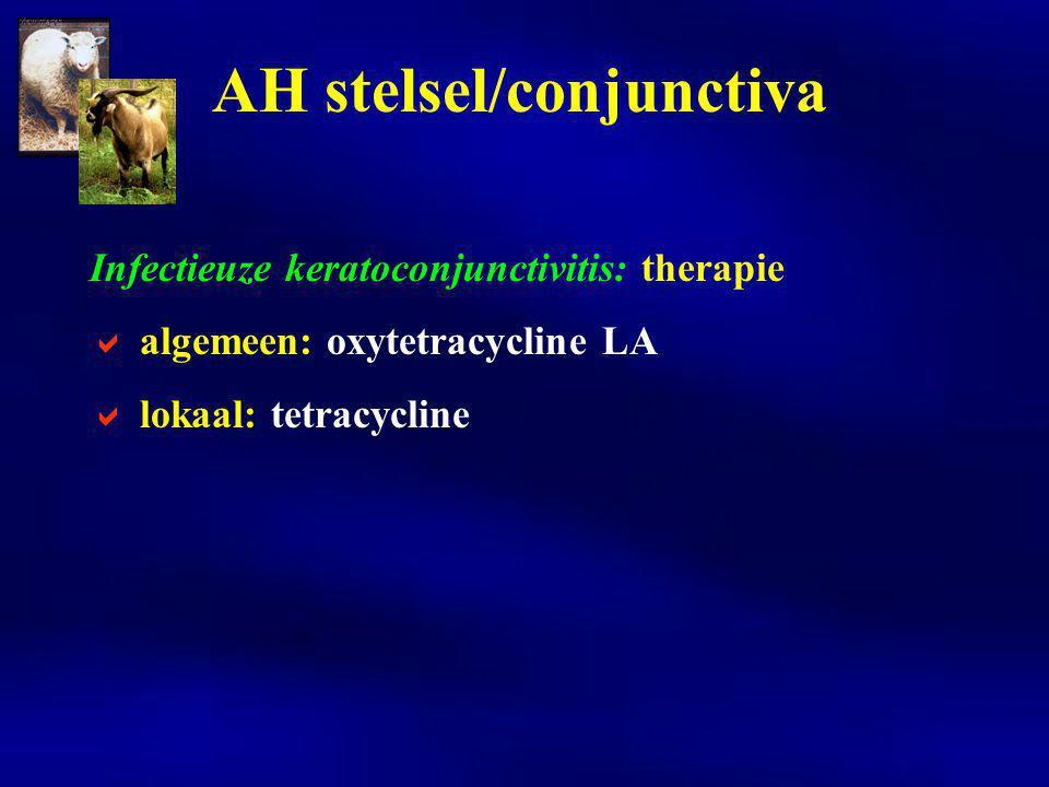Infectieuze keratoconjunctivitis: therapie  algemeen: oxytetracycline LA  lokaal: tetracycline AH stelsel/conjunctiva