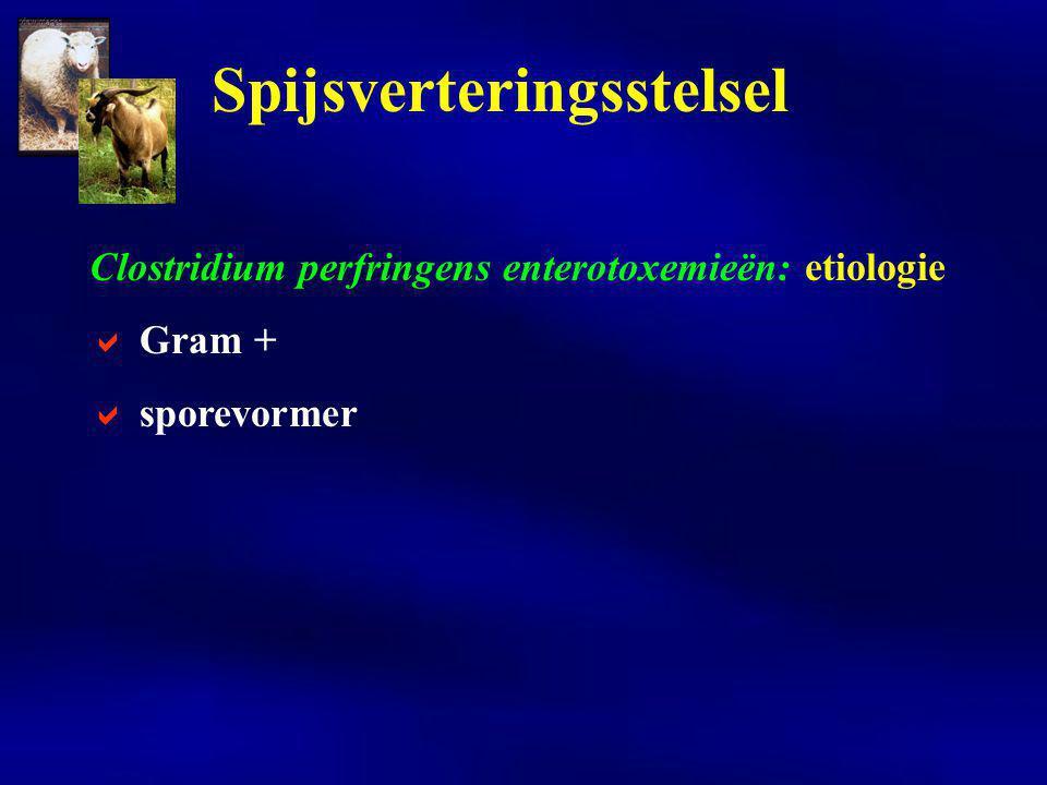 Clostridium perfringens enterotoxemieën: etiologie  facultatief of obligaat symbiotisch facultatief pathogeen: DD exotoxigeen Spijsverteringsstelsel