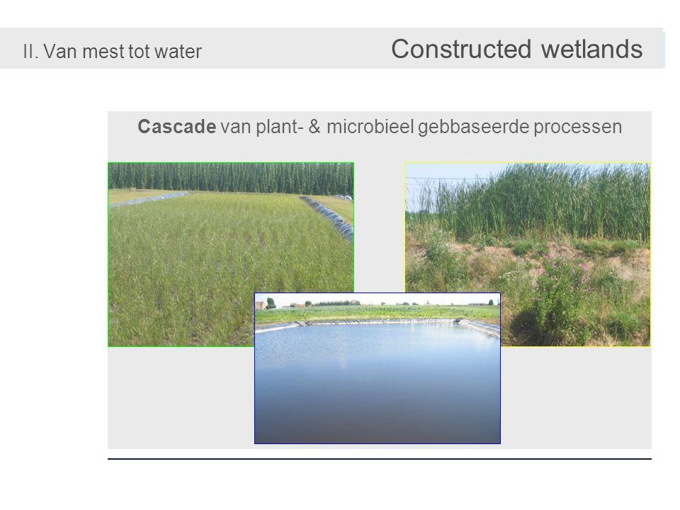 Rijke diversiteit van plant species & substraten II. Van mest tot water Constructed wetlands