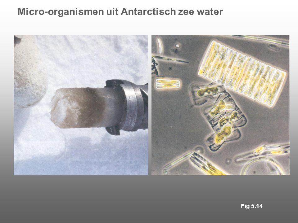 Micro-organismen uit Antarctisch zee water Fig 5.14
