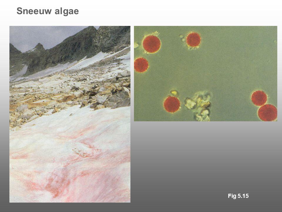 Sneeuw algae Fig 5.15