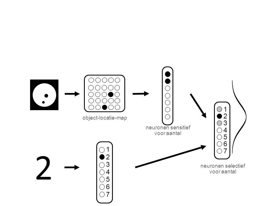 object-locatie-map neuronen selectief voor aantal 1 2 3 4 5 6 7 neuronen sensitief voor aantal 2 1 2 3 4 5 6 7
