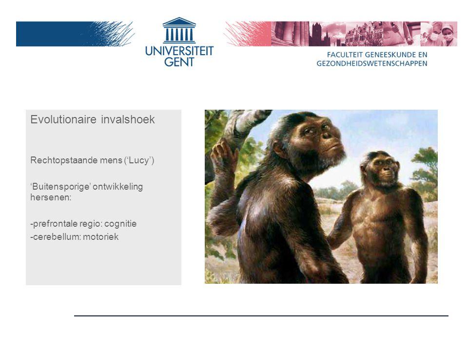 Evolutionaire invalshoek Rechtopstaande mens ('Lucy') 'Buitensporige' ontwikkeling hersenen: -prefrontale regio: cognitie -cerebellum: motoriek