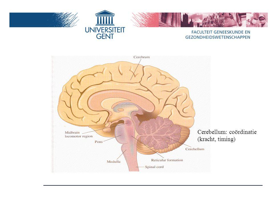 Cerebellum: coördinatie (kracht, timing)