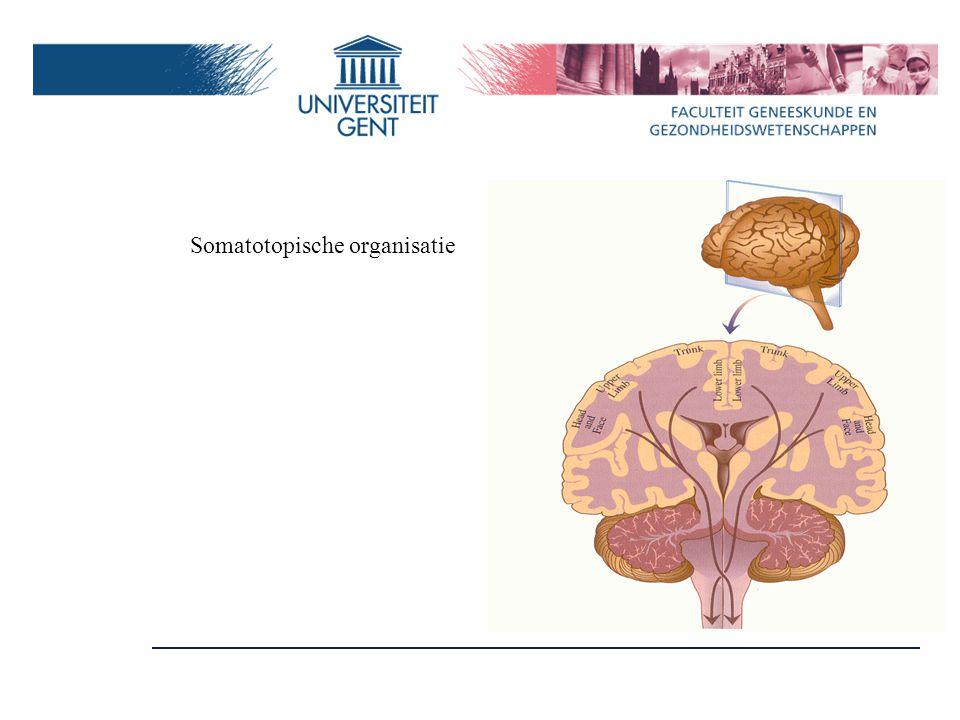 'Cognitieve zones' In hoofdzaak prefrontaal 'hogere' functies Abstract denken Beslissen Consequenties Aandacht onthouden