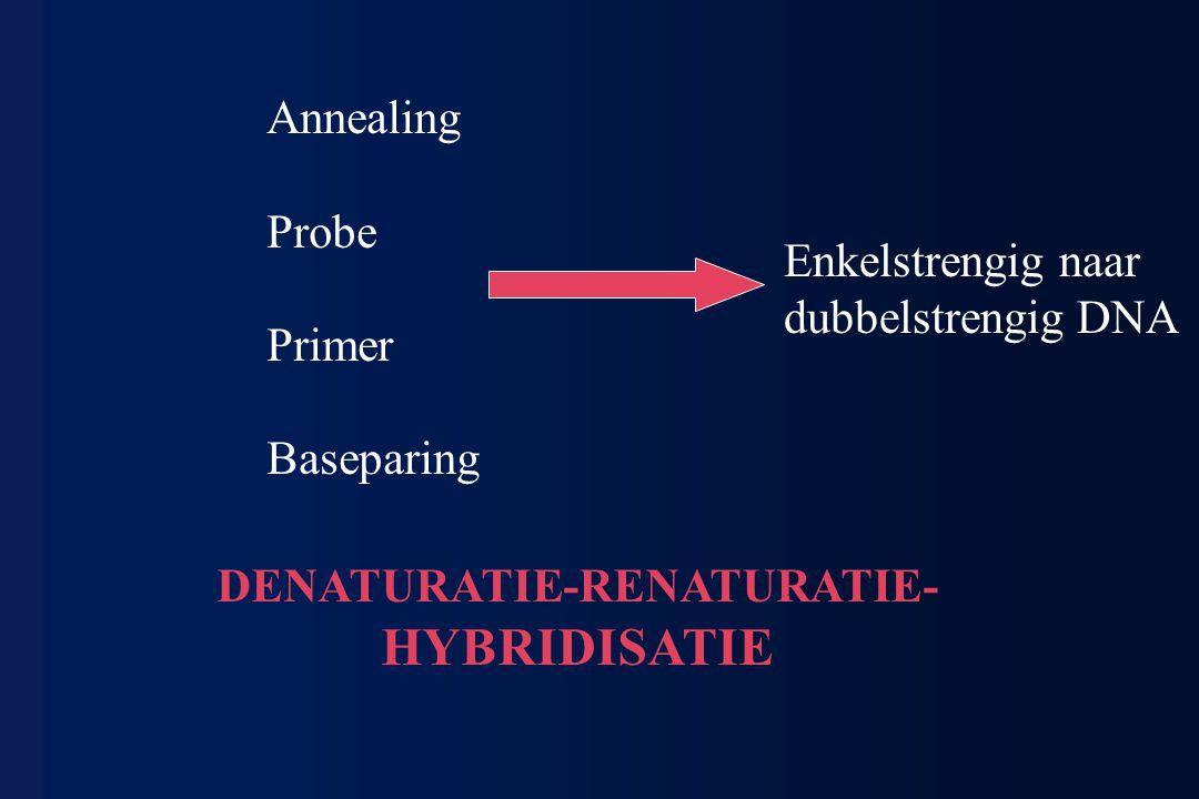 Annealing Probe Primer Baseparing Enkelstrengig naar dubbelstrengig DNA DENATURATIE-RENATURATIE- HYBRIDISATIE