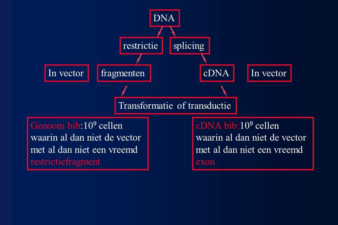 DNA restrictiesplicing Genoom bib:10 9 cellen waarin al dan niet de vector met al dan niet een vreemd restrictiefragment cDNA bib:10 9 cellen waarin a