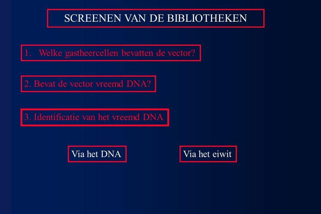 SCREENEN VAN DE BIBLIOTHEKEN 1.Welke gastheercellen bevatten de vector? 2. Bevat de vector vreemd DNA? 3. Identificatie van het vreemd DNA Via het DNA