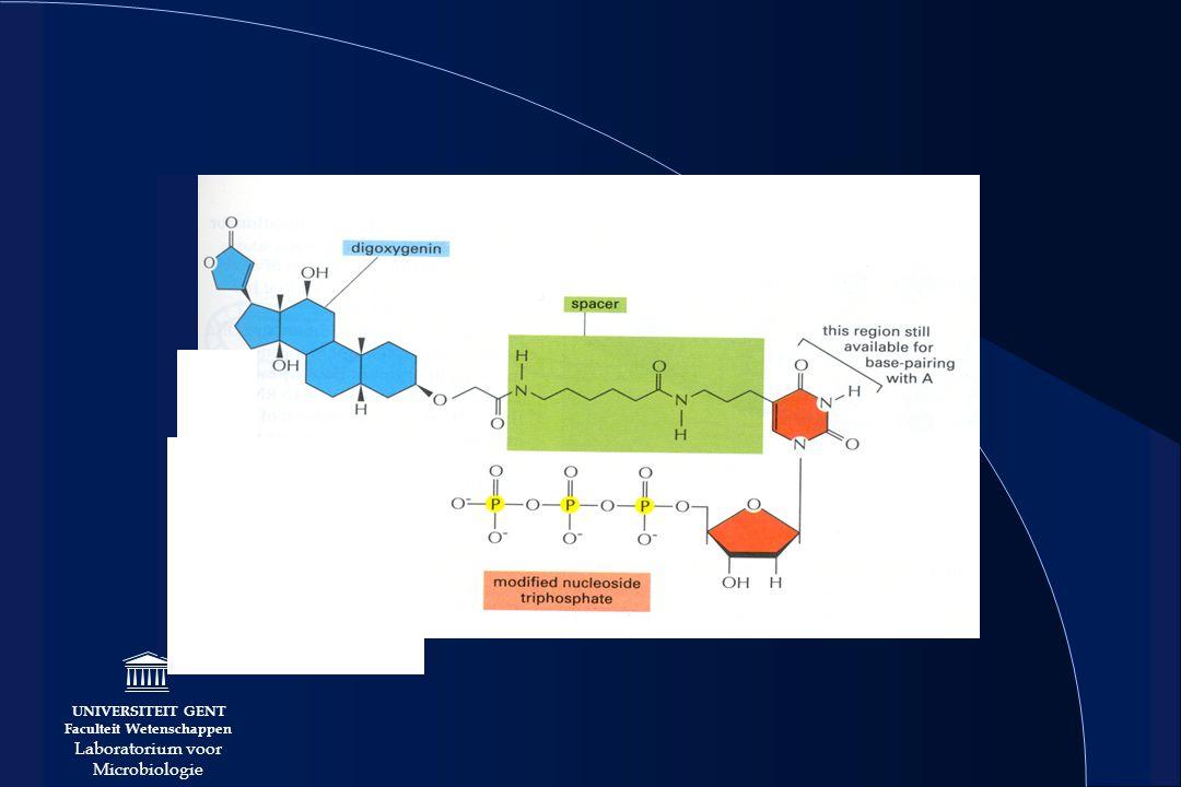 UNIVERSITEIT GENT Faculteit Wetenschappen Laboratorium voor Microbiologie