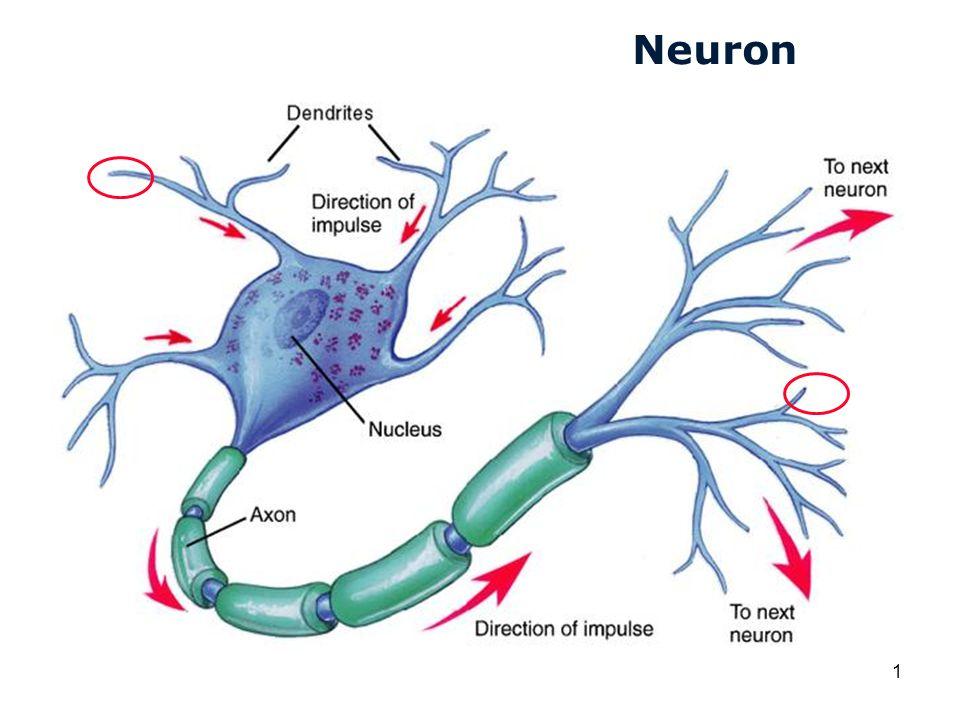 Cardiovascular Research Institute Maastricht (CARIM) 1 Neuron