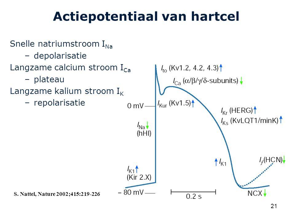 Cardiovascular Research Institute Maastricht (CARIM) 21 Actiepotentiaal van hartcel Snelle natriumstroom I Na –depolarisatie Langzame calcium stroom I Ca –plateau Langzame kalium stroom I K –repolarisatie S.