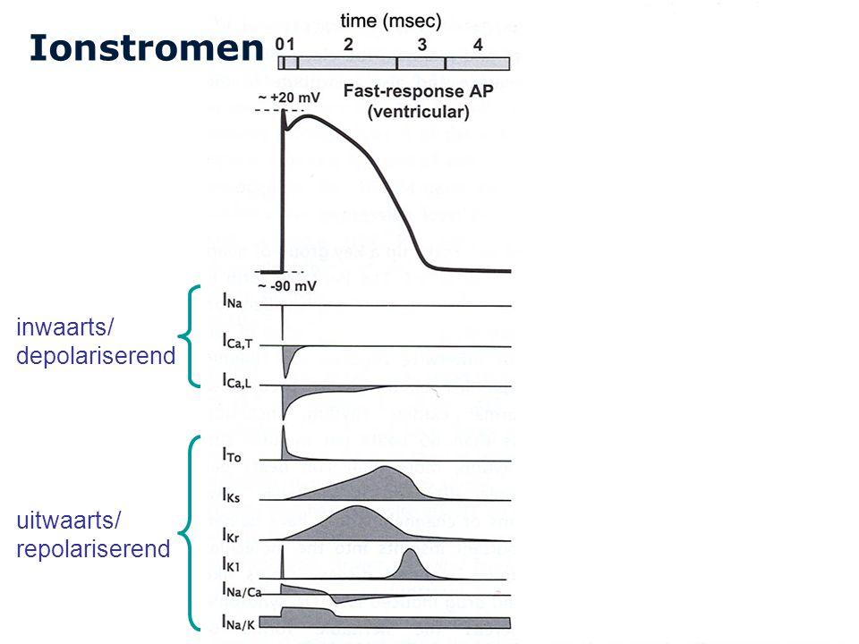 Cardiovascular Research Institute Maastricht (CARIM) 27 Ionstromen inwaarts/ depolariserend uitwaarts/ repolariserend