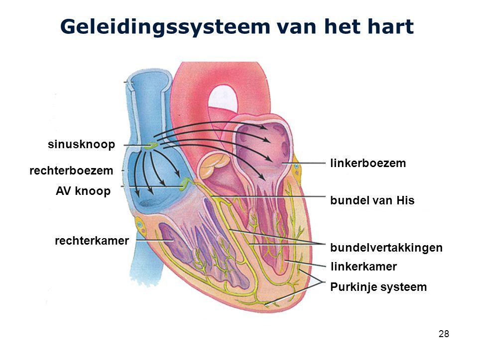 Cardiovascular Research Institute Maastricht (CARIM) 28 Geleidingssysteem van het hart sinusknoop AV knoop linkerboezem bundel van His bundelvertakkingen linkerkamer Purkinje systeem rechterkamer rechterboezem