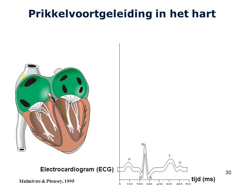 Cardiovascular Research Institute Maastricht (CARIM) College 58E020 Inleiding Meten 30 Prikkelvoortgeleiding in het hart Electrocardiogram (ECG) tijd (ms) Malmivuo & Plonsey, 1995