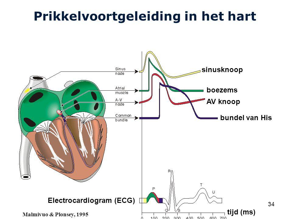Cardiovascular Research Institute Maastricht (CARIM) College 58E020 Inleiding Meten 34 Prikkelvoortgeleiding in het hart sinusknoop boezems AV knoop bundel van His Electrocardiogram (ECG) tijd (ms) Malmivuo & Plonsey, 1995