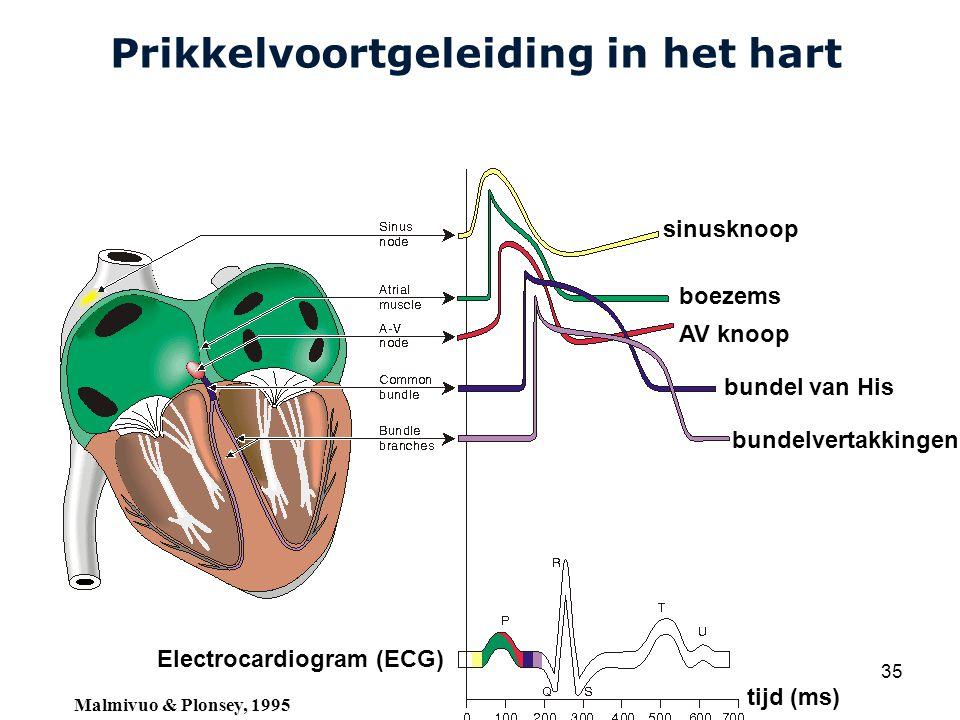 Cardiovascular Research Institute Maastricht (CARIM) College 58E020 Inleiding Meten 35 Prikkelvoortgeleiding in het hart sinusknoop boezems AV knoop bundel van His bundelvertakkingen Electrocardiogram (ECG) tijd (ms) Malmivuo & Plonsey, 1995