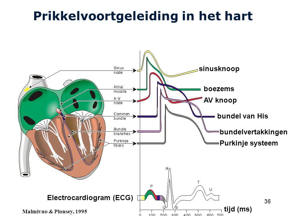 Cardiovascular Research Institute Maastricht (CARIM) College 58E020 Inleiding Meten 36 Prikkelvoortgeleiding in het hart sinusknoop boezems AV knoop bundel van His bundelvertakkingen Purkinje systeem Electrocardiogram (ECG) tijd (ms) Malmivuo & Plonsey, 1995