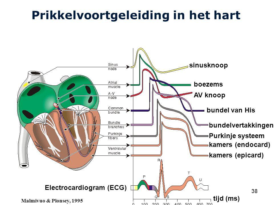 Cardiovascular Research Institute Maastricht (CARIM) College 58E020 Inleiding Meten 38 Prikkelvoortgeleiding in het hart sinusknoop boezems AV knoop bundel van His bundelvertakkingen Purkinje systeem kamers (endocard) kamers (epicard) Electrocardiogram (ECG) tijd (ms) Malmivuo & Plonsey, 1995