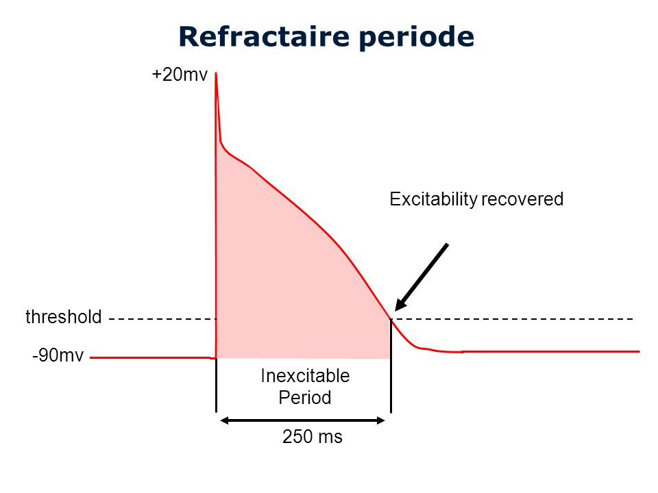 Cardiovascular Research Institute Maastricht (CARIM) Refractaire periode 250 ms threshold -90mv +20mv Excitability recovered Inexcitable Period
