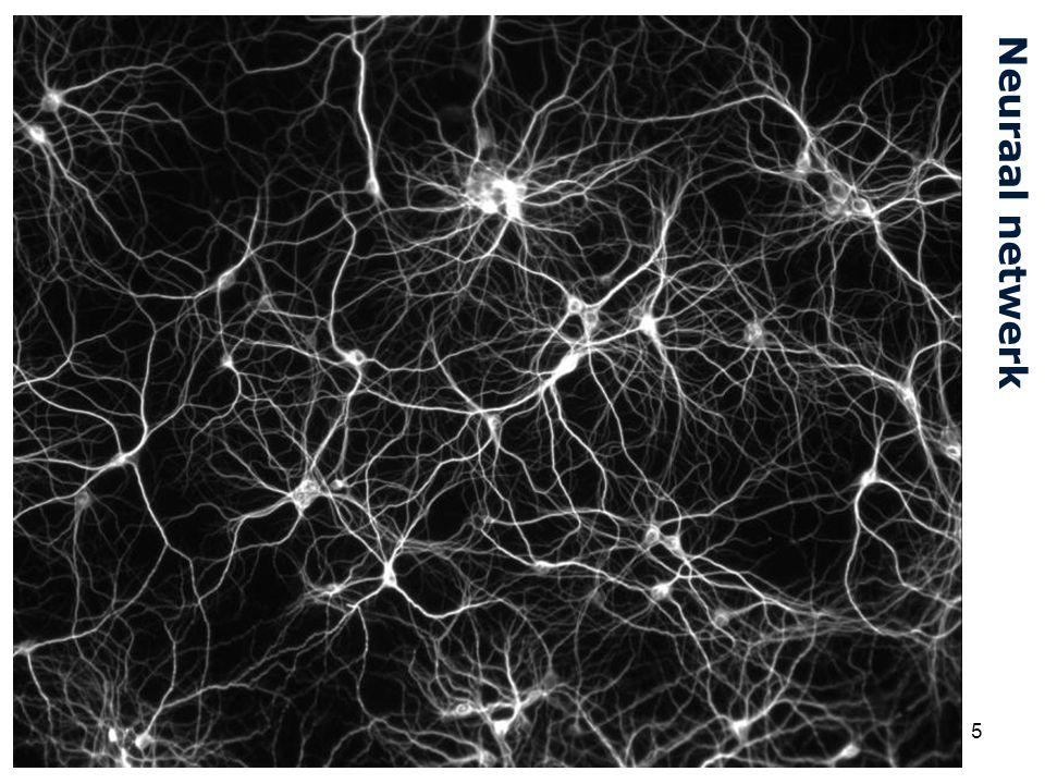 Cardiovascular Research Institute Maastricht (CARIM) 5 Neuraal netwerk