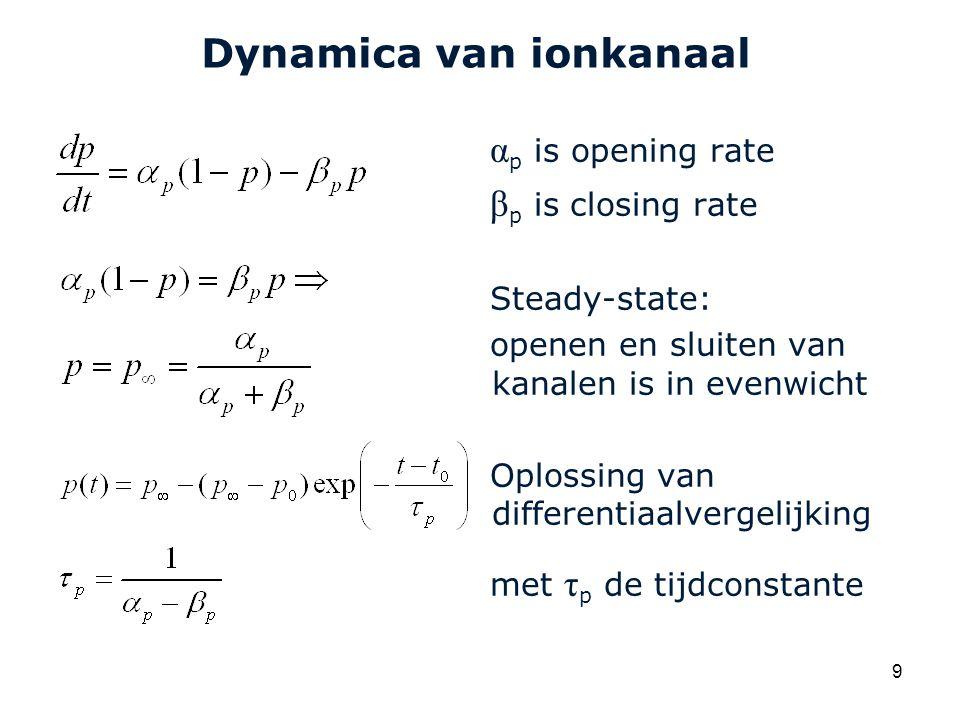 Cardiovascular Research Institute Maastricht (CARIM) 9 Dynamica van ionkanaal α p is opening rate β p is closing rate Steady-state: openen en sluiten van kanalen is in evenwicht Oplossing van differentiaalvergelijking met τ p de tijdconstante