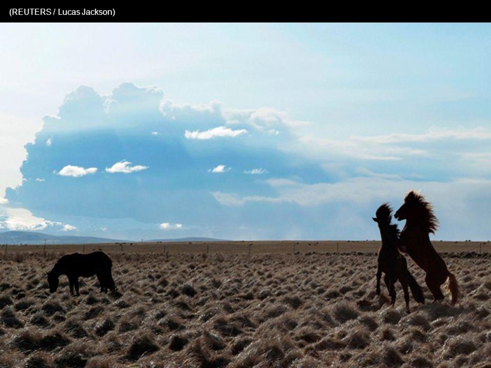 De boeren vormen groepjes om de veestapel te beschermen tegen de toxische vulkaanas (Photo AP / Gauti Brynjar)