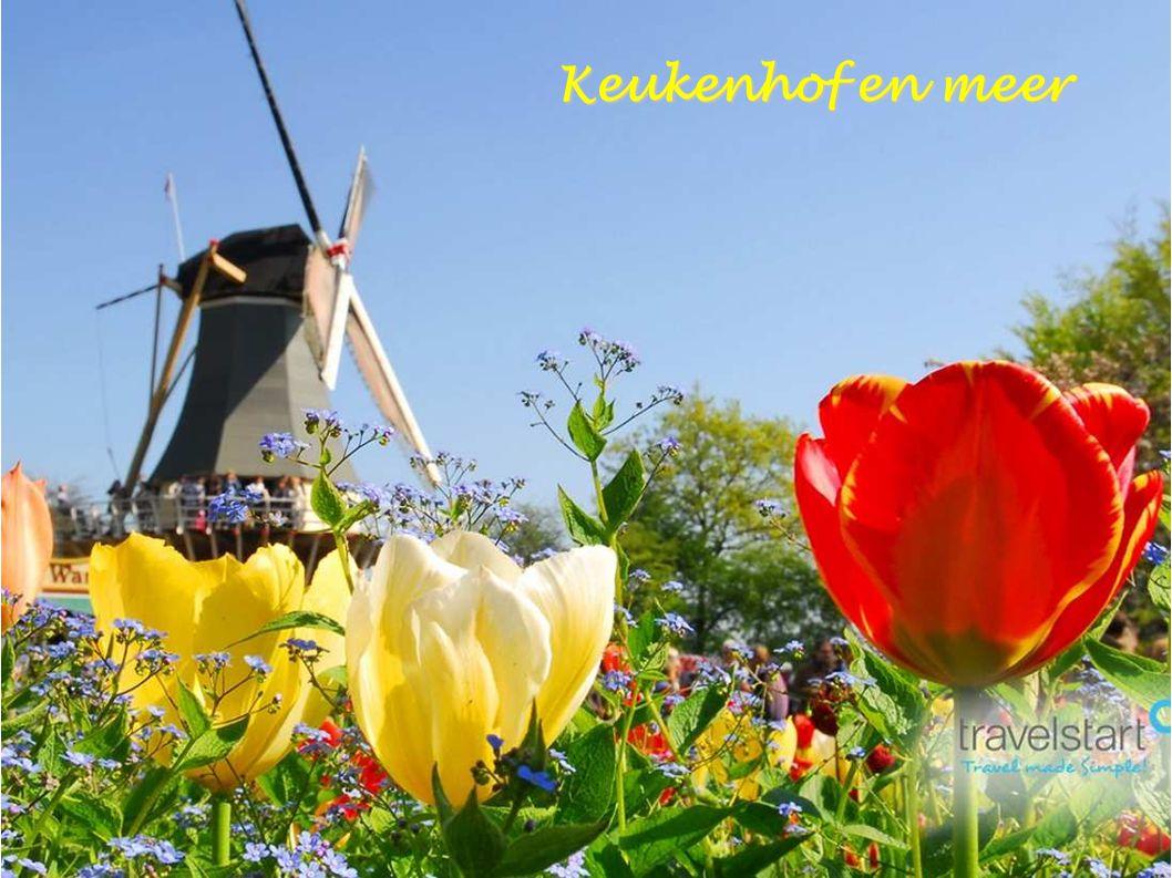 Tulpendagen - Amsterdam Flevoland in de Tulpen Lathyrus