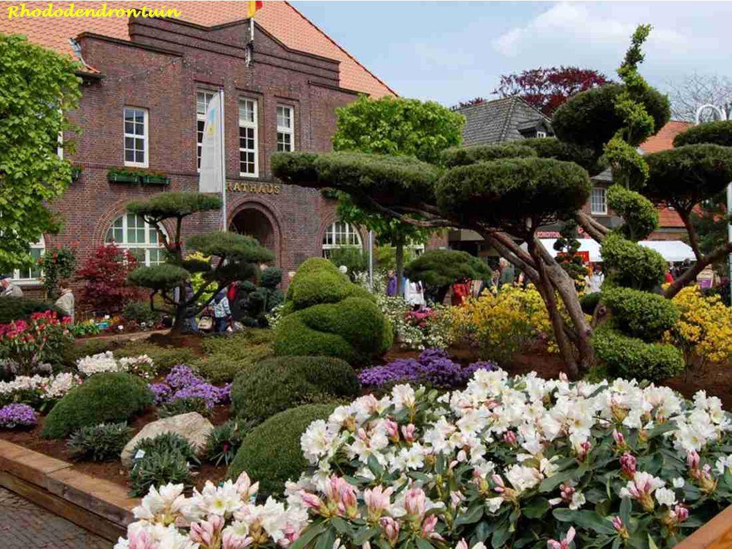 Helleborus in Hortus Botanicus