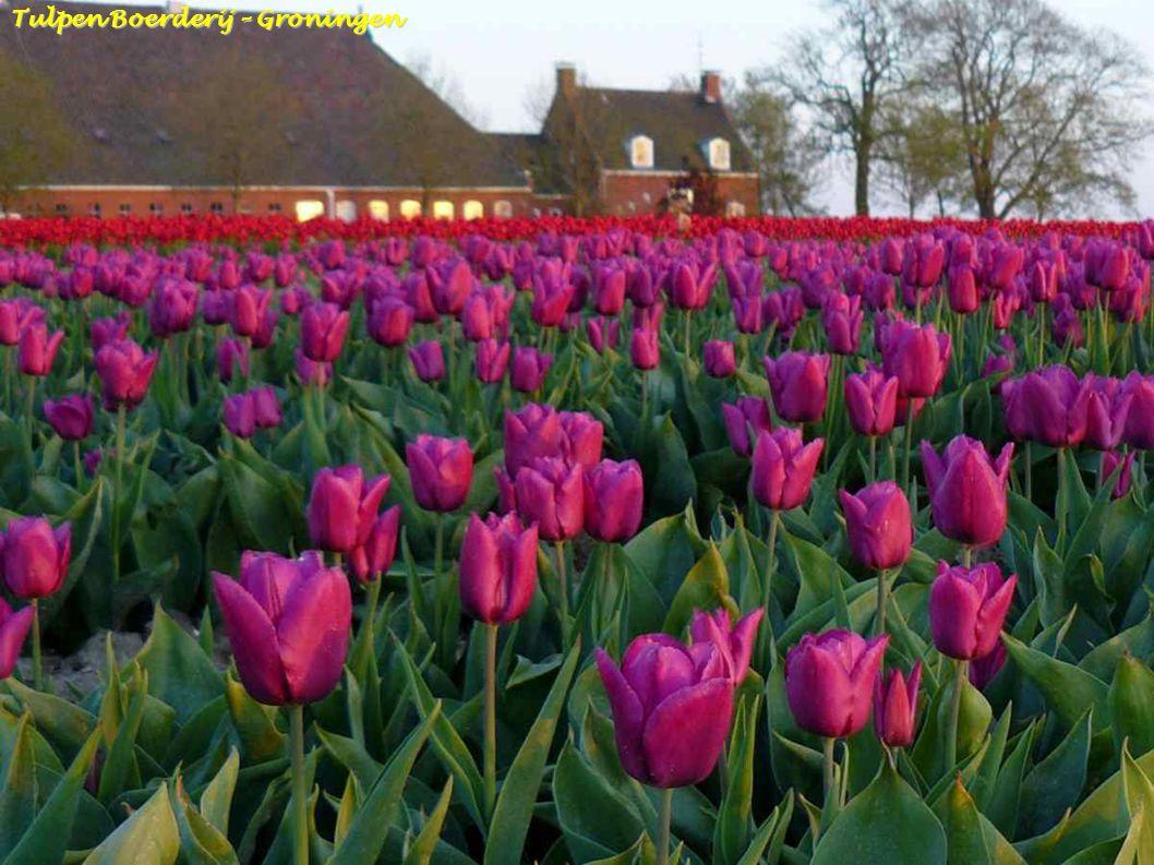 Tuinroute Groningen